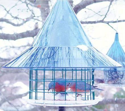 Sky Cafe Bluebird Feeder