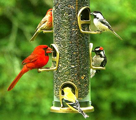 Cardinal and Songbird Feeder