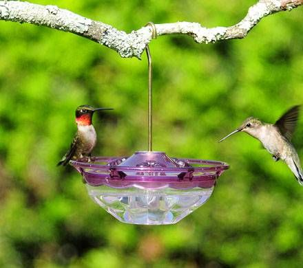 Compact Hummingbird Feeder