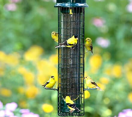 Squirrel Proof Finch Feeder