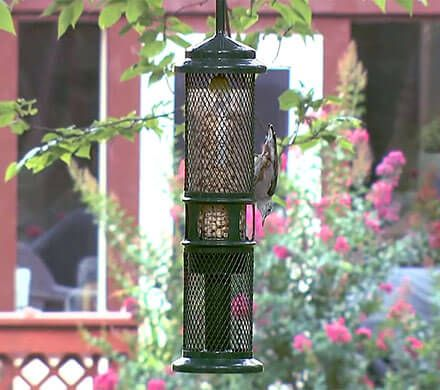 Squirrel Buster Nut & Nugget Feeder