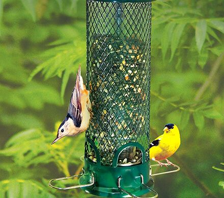 Mini Squirrel-Proof Bird Feeder