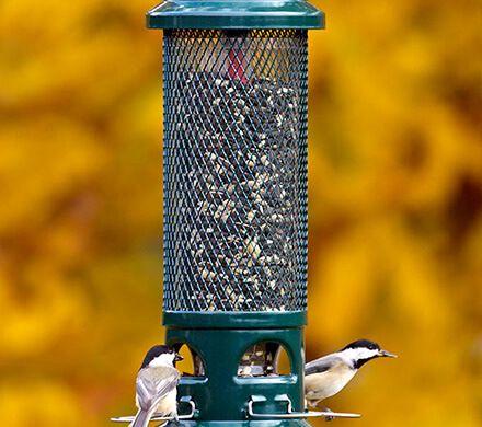 Squirrel Buster Legacy Bird Seed Feeder