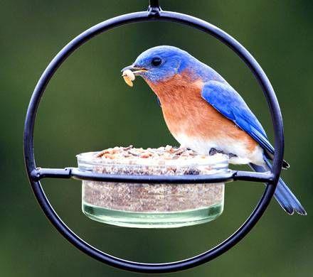 Sphere Hanging Bird Feeder