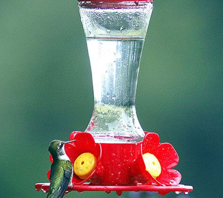 Glass Hourglass Hummingbird Feeder
