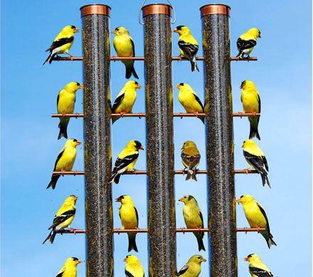 Finches Favorite 3-Tube Feeder