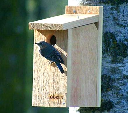 Peek-A-Boo Bluebird Nesting Box