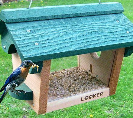 Cedar Bluebird Feeder