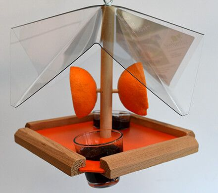 Oriole Fruit & Jelly Feeder