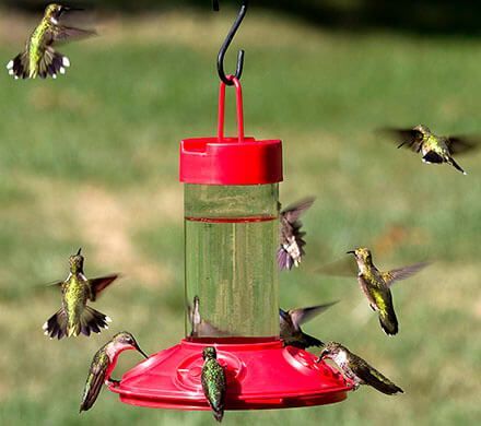 Rugged Hummingbird Feeder