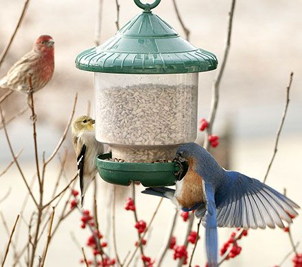 Compact Clinger Bird Feeder