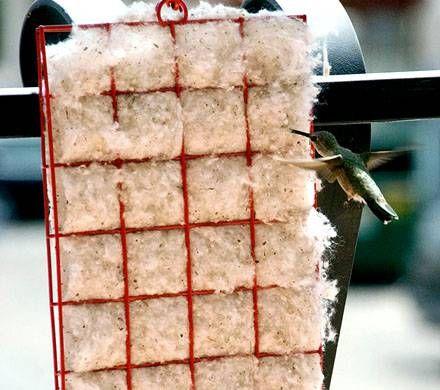 Hummingbird Nesting Supplies