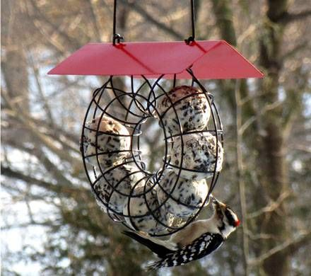Covered Suet Ball Feeder