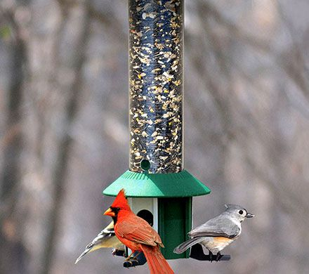 Squirrel-Proof Songbird Feeder