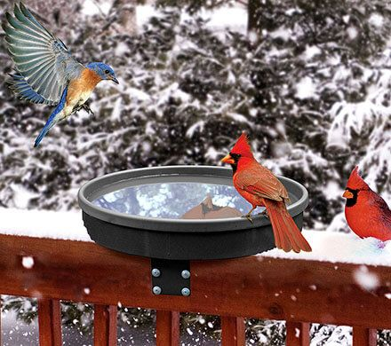 Shallow Heated Birdbath