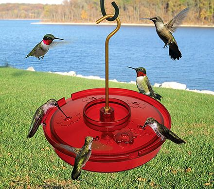 Easy Fill Hummingbird Feeder