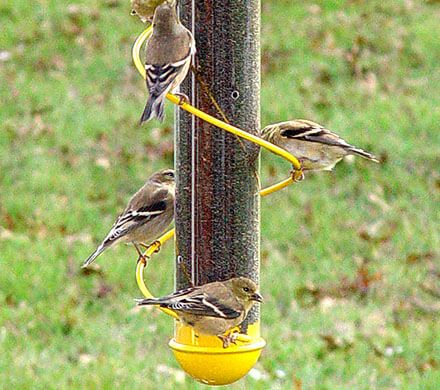 Colorful Spiral Finch Feeder