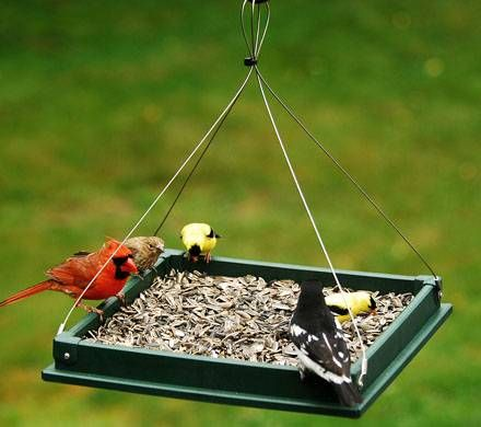 Hanging Platform Bird Feeder