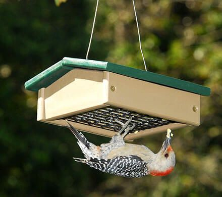 Suet-Sized Upside Down Feeder