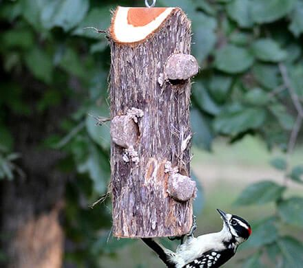 Perch-Free Suet Log Feeder