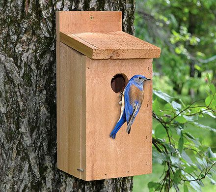 Red Cedar Bluebird Home