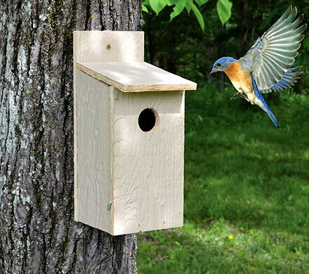 Basic Bluebird Nesting Box