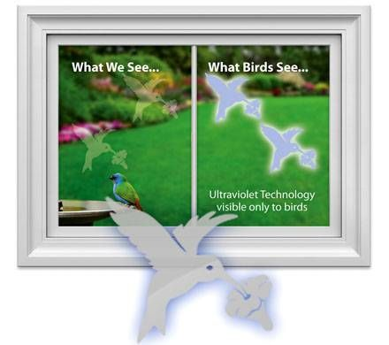 Hummingbird Window Decal
