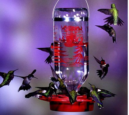 Glass Bottle Hummingbird Feeder