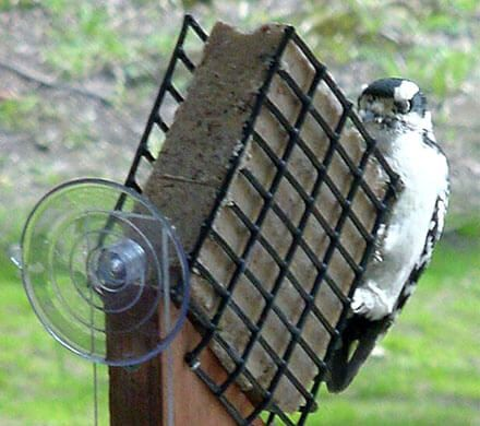 Window Suet Feeder