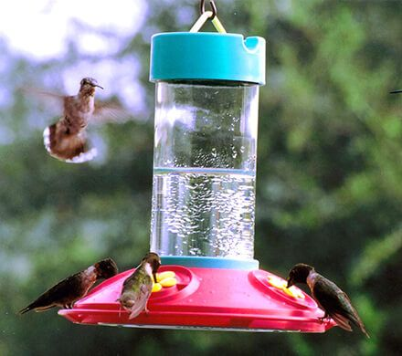 Wide Mouth Hummingbird Feeder