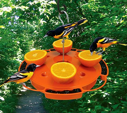 3-Way Oriole Feeder