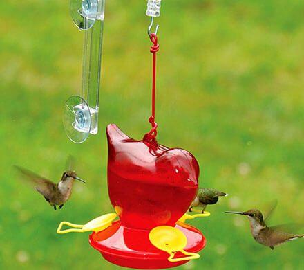 Window Hummingbird Feeder and Hanger