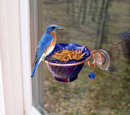 Bluebird Mealworm Window Feeder