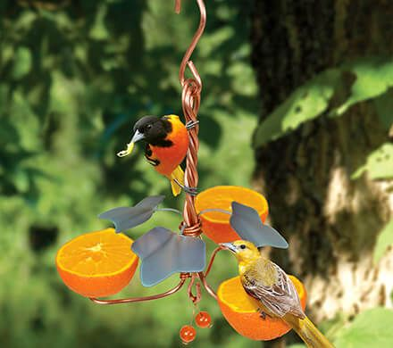 Copper Triple Oriole Feeder