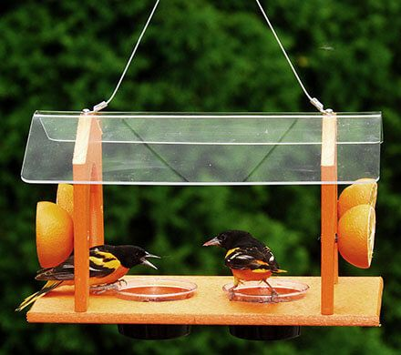 Large Covered Oriole Feeder