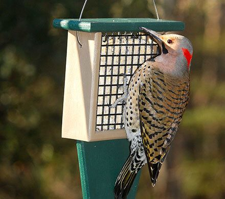 Suet Woodpecker Feeder